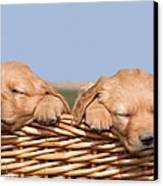 Two Cute Puppies Asleep In Basket Canvas Print