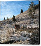 Two Horses Canvas Print by Ric Soulen