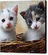 Two Kittens In Basket Canvas Print by Garry Gay