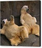 Two Lounging Polar Bears Canvas Print by Joel Sartore