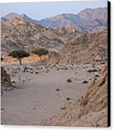 Two Trees In The Desert Canvas Print by Frits Selier