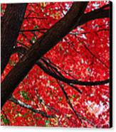 Under The Reds Canvas Print