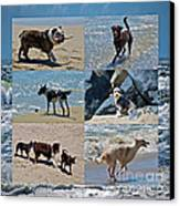 Uninhibited Creatures Canvas Print by Gwyn Newcombe