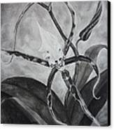 Upside-down Orchid Canvas Print