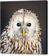 Ural Owl Canvas Print by Tom Gowanlock
