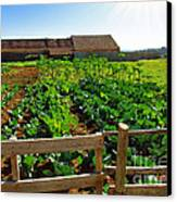 Vegetable Farm Canvas Print by Carlos Caetano