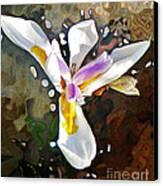 Venice Iris Canvas Print by Daniele Smith