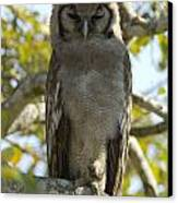 Verreauxs Eagle Owl, Bubo Lacteus, Or Canvas Print by Paul Sutherland