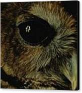 View Of A Northern Spotted Owl Strix Canvas Print by Joel Sartore