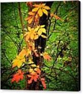 Vine Canvas Print by Michael L Kimble