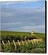 Vines In Burgundy. France Canvas Print