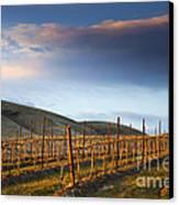 Vineyard Storm Canvas Print by Mike  Dawson