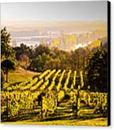 Vineyard Canvas Print by Voisin and Phanie and Photo Researchers