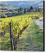 Vineyards And Farmhouse Canvas Print