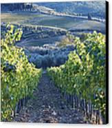 Vineyards Canvas Print by Jeremy Woodhouse