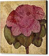 Vintage Cabbage Canvas Print by Bonnie Bruno