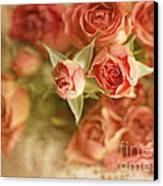 Vintage Peaches N Creme Spray Roses Canvas Print by Susan Gary