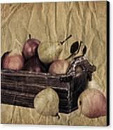 Vintage Pears Canvas Print by Jane Rix