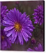 Vintage Purple  Canvas Print by Richard Cummings