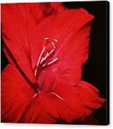 Vision Of Red Canvas Print by Cathie Tyler
