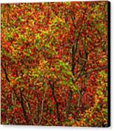Wall Of Red Canvas Print by Ed Smith