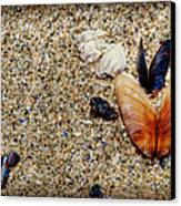 Washed Up Canvas Print by Lisa Knechtel