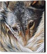 Watchful Rest -close-up Detail Canvas Print by Elena Kolotusha