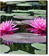 Water Lilies Canvas Print by Bill Cannon