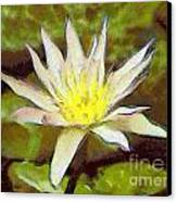 Water Lily Canvas Print by Odon Czintos
