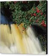 Waterfall And Fuschia, Ireland Canvas Print