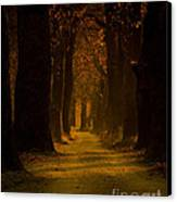 Way In The Forest Canvas Print