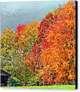 West Virginia Maples 2 Canvas Print