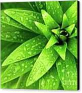Wet Foliage Canvas Print by Carlos Caetano