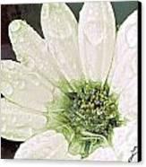 Wet Petals Canvas Print