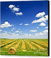 Wheat Farm Field At Harvest Canvas Print
