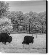 Where The Buffalo Roam Canvas Print by Jane Linders