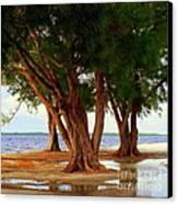 Whispering Trees Of Sanibel Canvas Print by Karen Wiles
