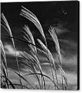 Whispering Wind Canvas Print by Dan Crosby