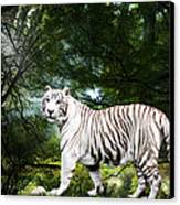White Bengal Canvas Print by Elizabeth Hart