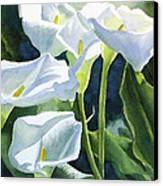 White Calla Lilies Canvas Print by Sharon Freeman