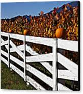 White Fence With Pumpkins Canvas Print