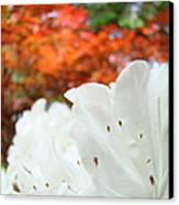 White Rhododendron Flowers Autumn Floral Prints Canvas Print by Baslee Troutman