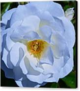 White Rose Canvas Print by Saifon Anaya