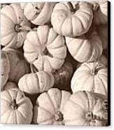 White Squash Canvas Print