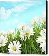 White Summer Daisies In Tall Grass Canvas Print by Sandra Cunningham