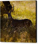 White Tail Canvas Print