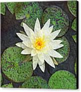White Water Lily Canvas Print by Andee Design