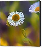 White Wildflower On Pastels Canvas Print by Bill Tiepelman