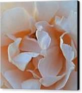 Whitest Rose Canvas Print by Naomi Berhane