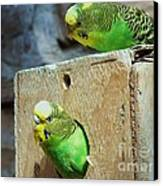 Who's There? Canvas Print by Donna Parlow
